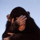 monyet malu